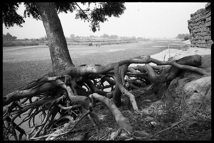 5-racines.jpg