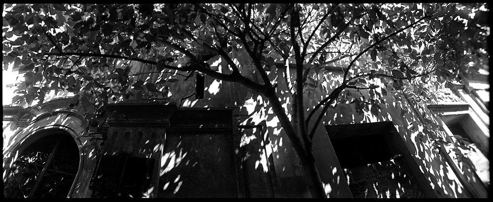 4-l-arbre.jpg