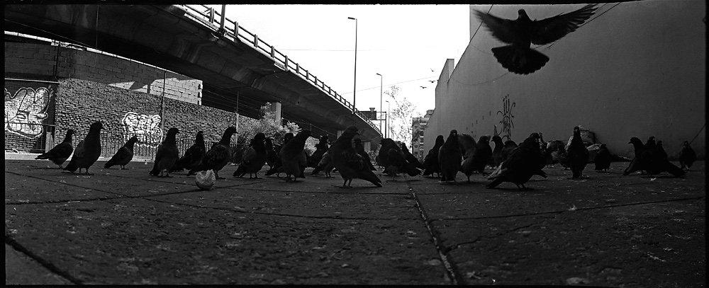 4-les-pigeons.jpg